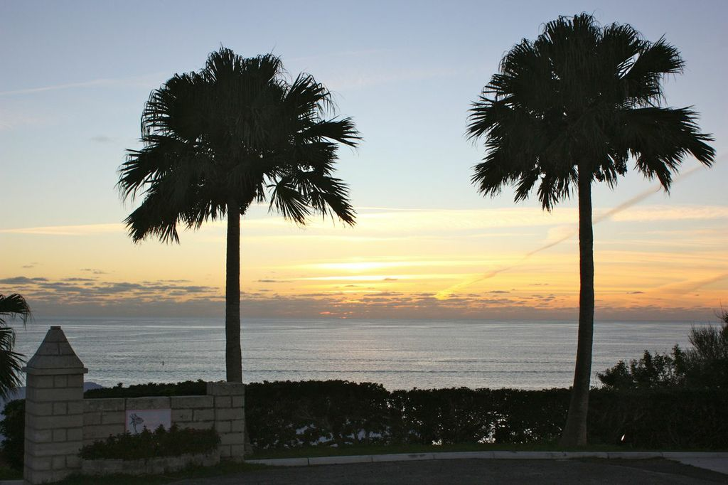 Palm Trees on the Sunset