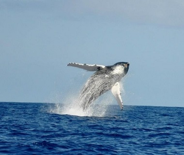 Bermuda whale watching
