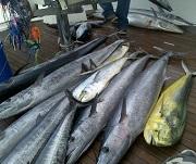 Bermuda Fishing Charter