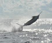 Deep Sea Fishing in Bermuda