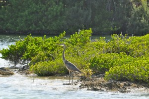 Bermuda Nature Tours