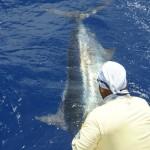 Catch Big Blue Marlin