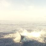 Blue Marlin Jumping Behind the Boat