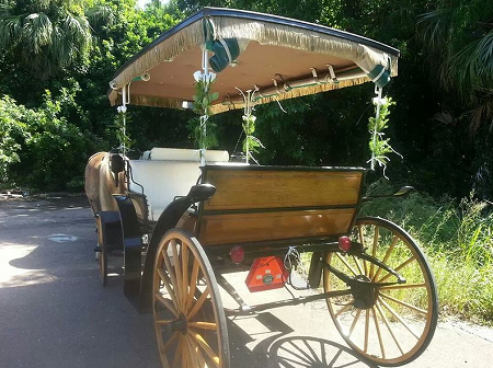 A Romantic Horse and Carriage Ride
