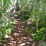 A nature path in Tom Moore's Jungle
