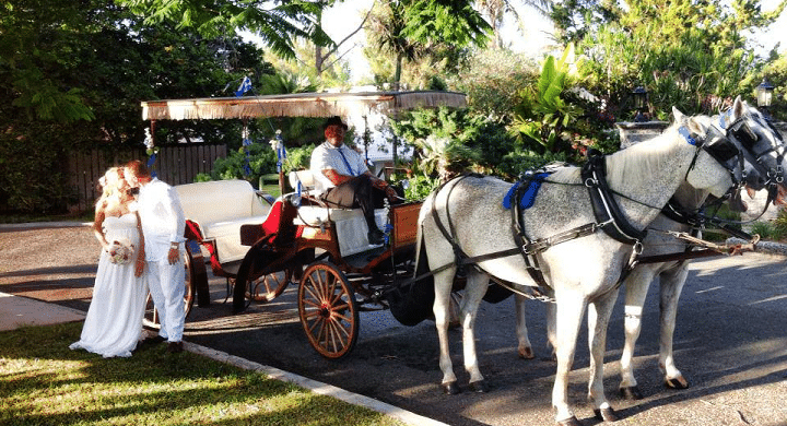 Horse and Carriage About to Carry a Wedding Couple