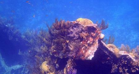 Bermuda Shipwreck